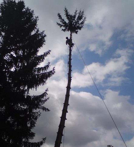 travaux en hauteur dans les arbres